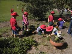 Maleny, Australia, gardening